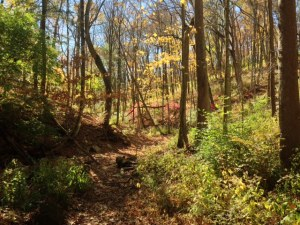 Mt Airy Forest